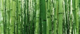 FotoTapet Imprimat – Bambus